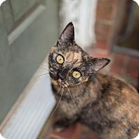Adopt A Pet :: Matilda - Statesville, NC