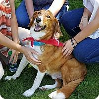 Adopt A Pet :: Charlie - Kalamazoo, MI