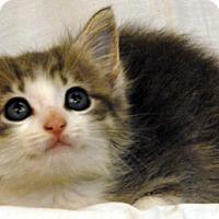 Adopt A Pet :: Balsam - Newland, NC