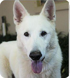 German Shepherd Dog Mix Dog for adoption in Red Bluff, California - KIMBER