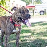 Adopt A Pet :: Stone- Ohio - Fulton, MO