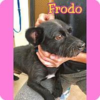 Adopt A Pet :: Froto - Mesa, AZ