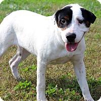 Adopt A Pet :: Jewel - Waldorf, MD