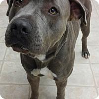 Adopt A Pet :: Athena - Cloquet, MN