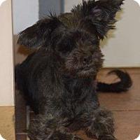 Adopt A Pet :: ELISE - Tucson, AZ