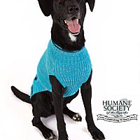 Adopt A Pet :: Shadow - Fayetteville, AR