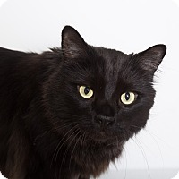 Adopt A Pet :: Beaker - Mission Viejo, CA