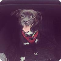 Adopt A Pet :: Hugh Laurie - Jersey City, NJ