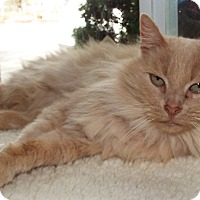 Adopt A Pet :: Ron Weasley - Grants Pass, OR