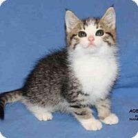 Adopt A Pet :: *EDDIE - Hanford, CA