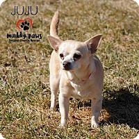 Adopt A Pet :: JuJu - Council Bluffs, IA