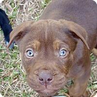 Adopt A Pet :: Lionel - Allen town, PA