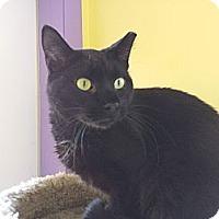 Adopt A Pet :: Frankie Valli - Richboro, PA