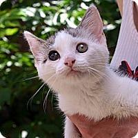 Adopt A Pet :: Pirate Jenny - Brooklyn, NY