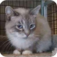 Adopt A Pet :: hardy - Davis, CA