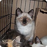 Adopt A Pet :: Chi - Acme, PA