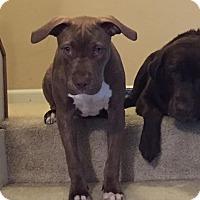 Adopt A Pet :: Hans - Villa Park, IL