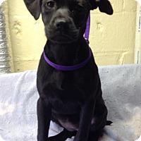 Adopt A Pet :: Heidi - Willingboro, NJ
