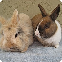 Adopt A Pet :: Nala & Zazu - Bonita, CA