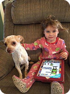 Chihuahua Mix Dog for adoption in Denver, Colorado - Minnie