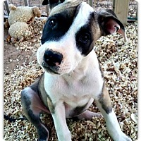 Adopt A Pet :: Tammy - Queen Creek, AZ