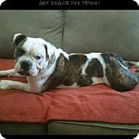 Adopt A Pet :: Fletcher - Santa Ana, CA