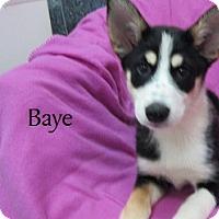 Adopt A Pet :: Baye - Bartonsville, PA