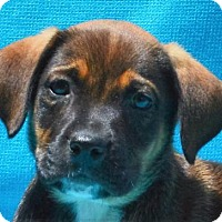 Adopt A Pet :: **RALPH** - Mukwonago, WI