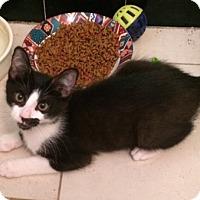 Adopt A Pet :: Stache - Cocoa, FL