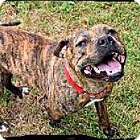 Adopt A Pet :: Cricket - Johnson City, TX
