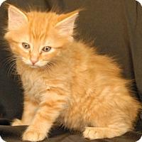 Adopt A Pet :: Pesto - Newland, NC