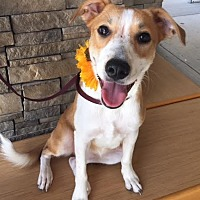 Retriever (Unknown Type) Mix Dog for adoption in Fort Worth, Texas - Anneke--Courtesy Listing