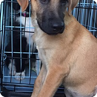 Adopt A Pet :: Reese - Irmo, SC