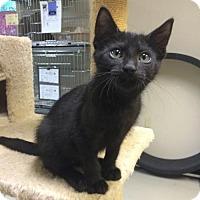 Adopt A Pet :: Godiva - Waco, TX