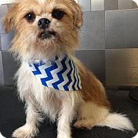 Adopt A Pet :: Nickelback - McKinney, TX
