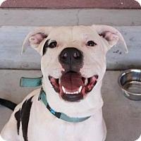 Adopt A Pet :: Conan - Los Banos, CA