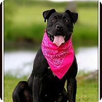 Adopt A Pet :: Dalyla - Madionsville, KY