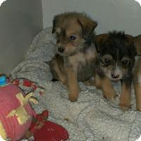 Adopt A Pet :: Bella &  Darby - Denver, IN
