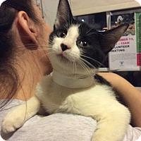 Adopt A Pet :: 'Bo'weevil - Breinigsville, PA