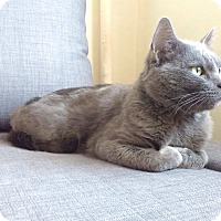 Adopt A Pet :: Patrick - Boston, MA