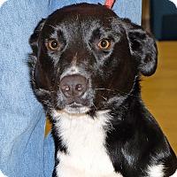 Adopt A Pet :: Zeus - Spokane, WA