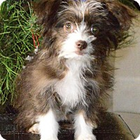 Adopt A Pet :: S'mores - Palo Alto, CA