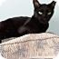Adopt A Pet :: Spade - Port Clinton, OH