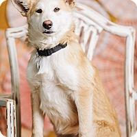 Adopt A Pet :: Coy - Portland, OR