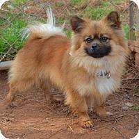 Adopt A Pet :: Hobson - Athens, GA