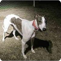 Adopt A Pet :: Peachy (Ptl Peachy) - Chagrin Falls, OH