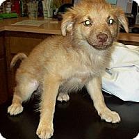 Adopt A Pet :: CHLOE - Glastonbury, CT