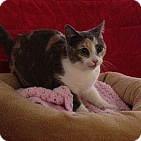Adopt A Pet :: Colleen - Simpsonville, SC