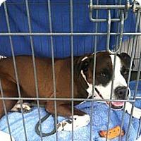 Adopt A Pet :: Wilson - Rockaway, NJ