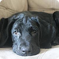 Adopt A Pet :: Amos - Mechanicsburg, PA